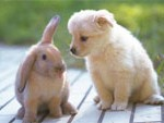 rabbit and pup