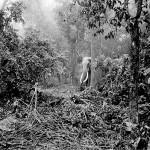 elephant woods