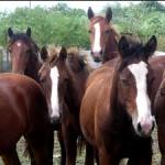 031709+Horses