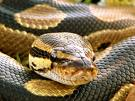 python face