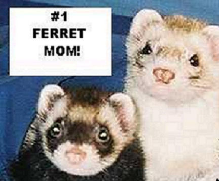 how to show your ferret affection